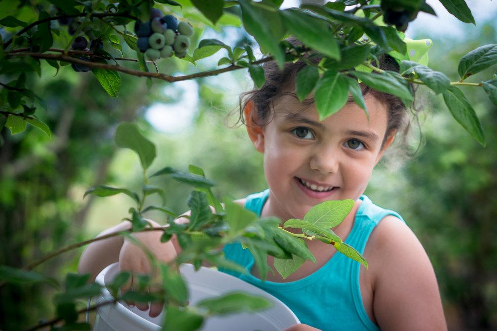 portrait-girl-picking-blueberries.jpg