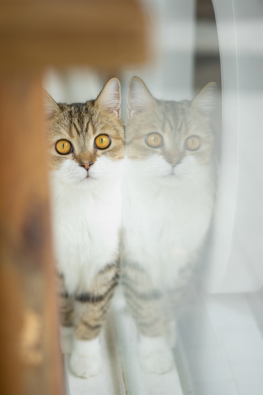 windowcat.jpg