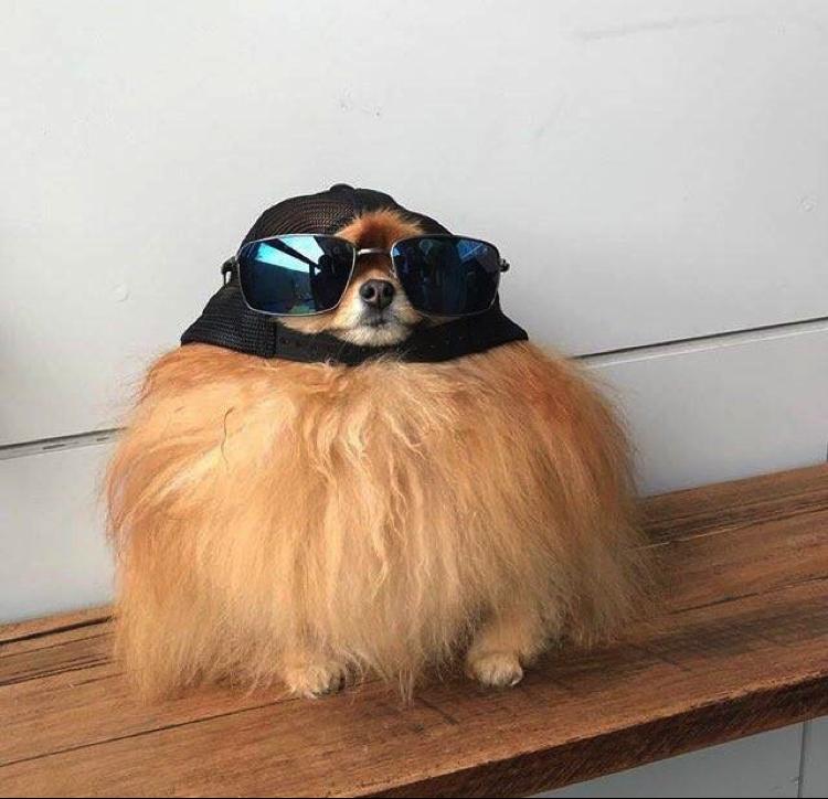 cooldog.png