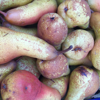 pears1.png