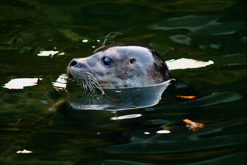 seal rescue - ireland