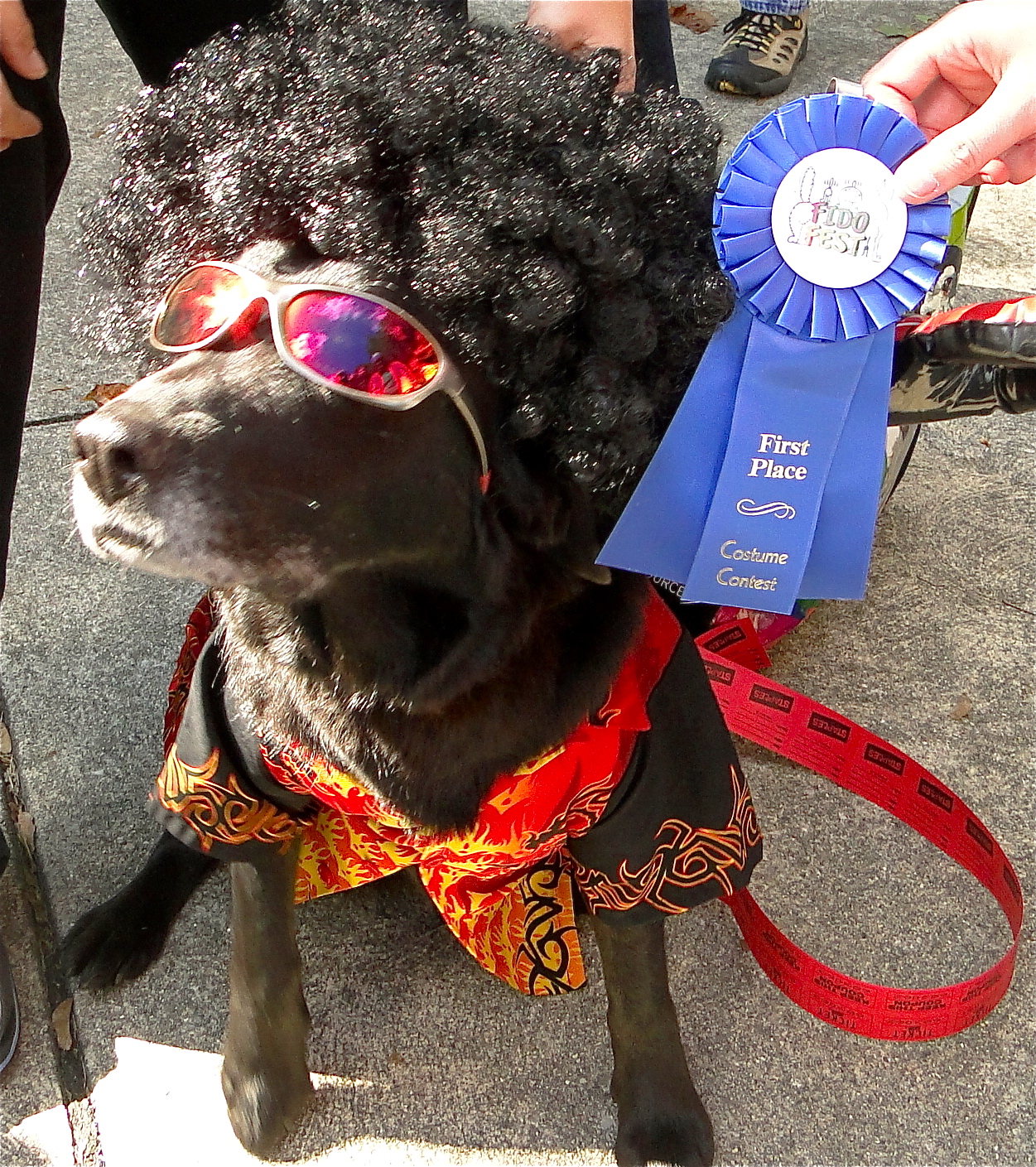Fido-Fest-dog-costume-winner