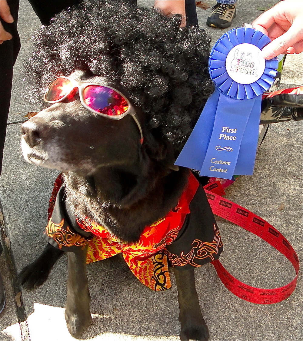 Fido-Fest-dog-costume-winner.jpg