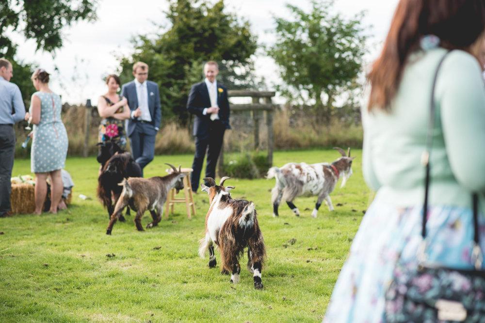 Peak+district+farm+wedding+lower+damgate+photographer-172.jpg