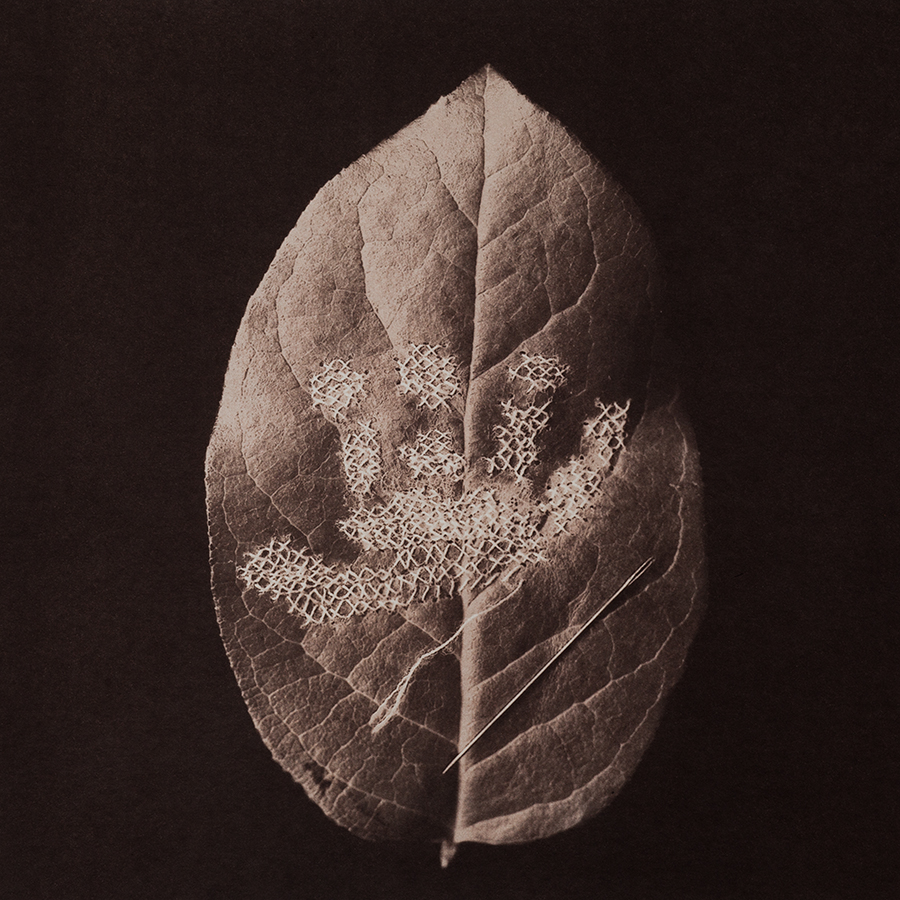 "Untitled 5, 2015, 10""x10"", Gold toned Vandyke Brown print on kozo"