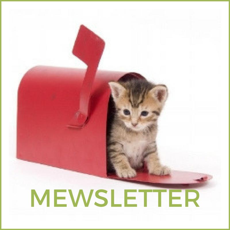 Web - Mewsletter.png