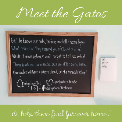 Have you heard of our Meet the Gatos project? We're asking our guests to meet the gatos and tell us what famous figure each cat personifies. Once you get a feel for their cat-alities, you can write down the cat's name, the celebrity (living or dead), and why the cat reminds you of this person. We'll use the best submissions for a themed photo shoot which we'll use to promote the cats and help them find their furrever homes! We're only taking submissions in-person at the cafe, so be sure to book your time!