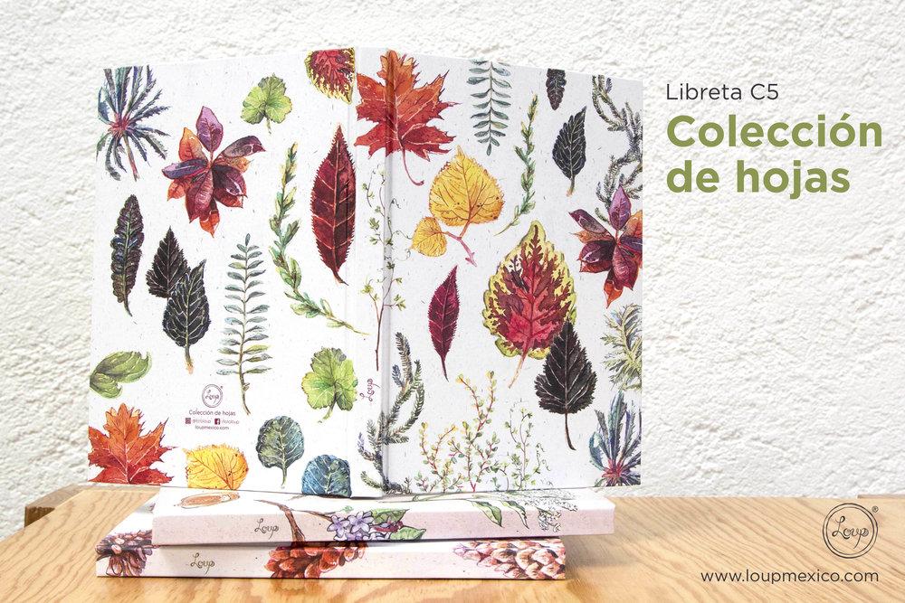 Colección de hojas   ¡la quiero para mi!