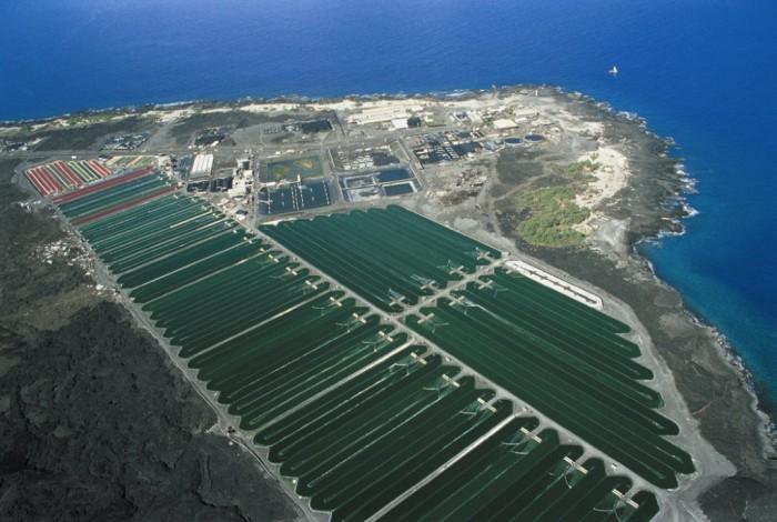 Spirulina ponds at Nutrex-Hawaii's processing facility in Kailuea-Kona, Hawaii.