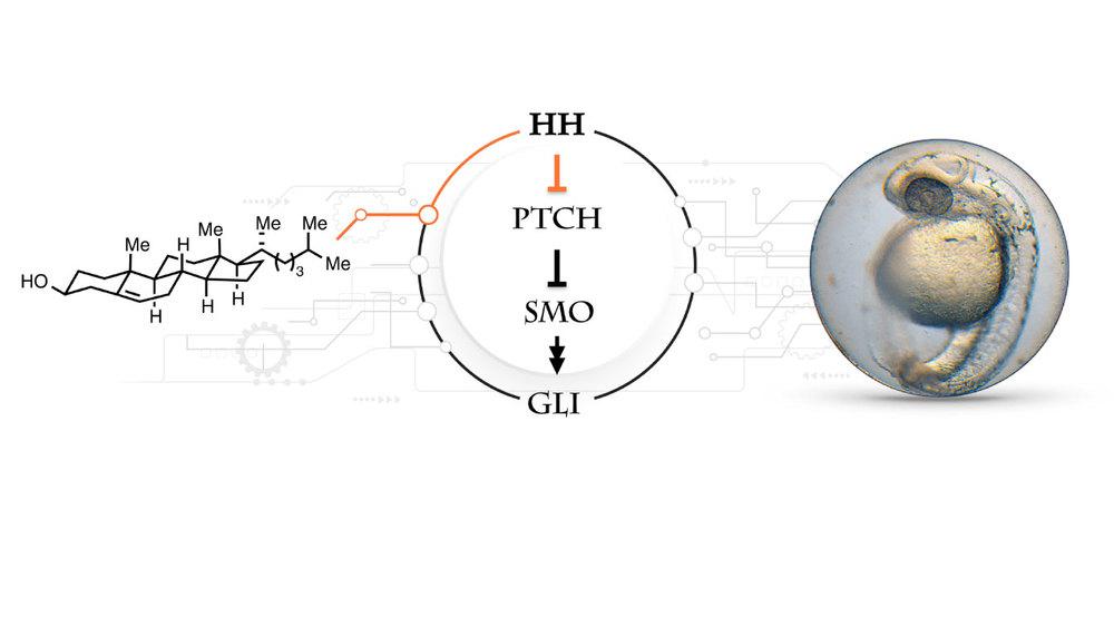 ondrus-lab-signaling-pathway-1.jpg