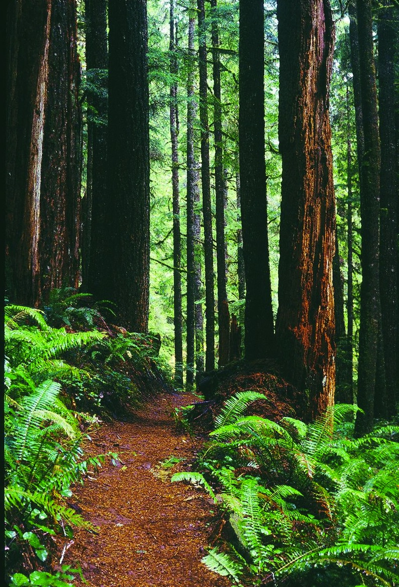 Figure 2. While only 4,350 acres in size, the North Fork Smith River roadless area on the Siuslaw National Forest is worthy of designation as wilderness. David Stone Wildland Photography