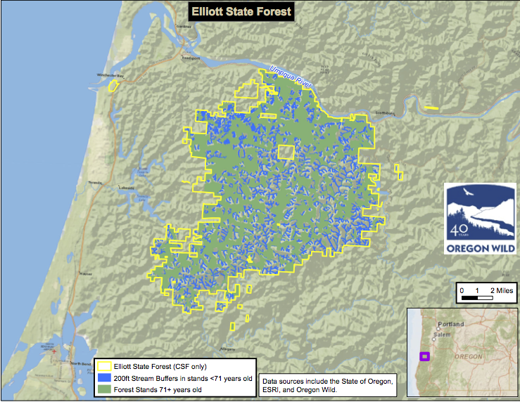 Most of the Elliott State Forest is older natural forest stands. Source: Oregon Wild.