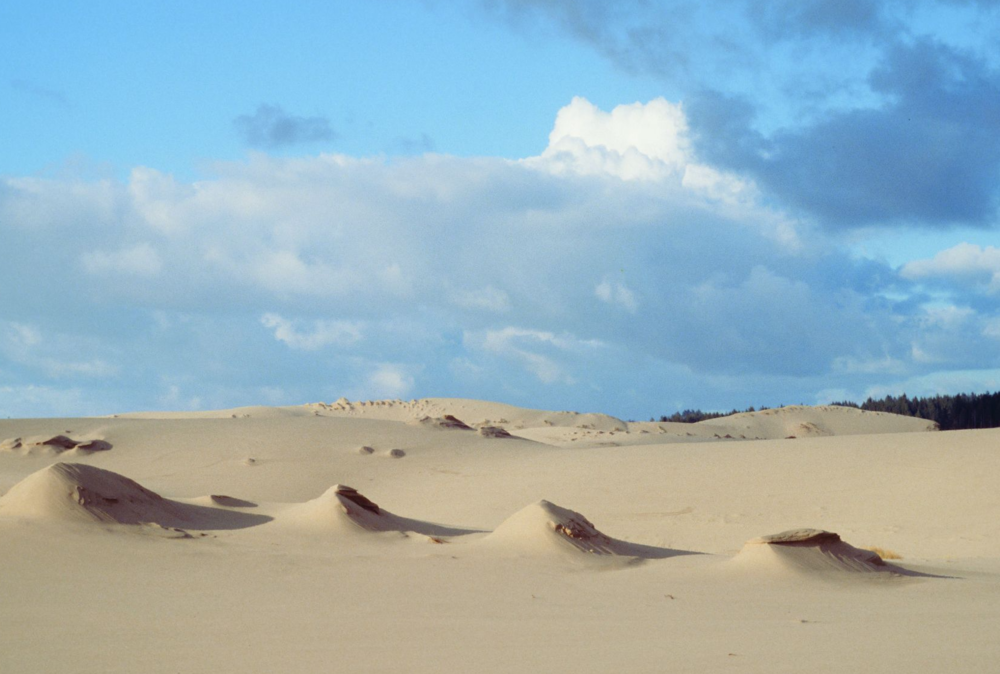 The Umpqua Dunes unit of the proposed Oregon Dunes Wilderness in the Oregon Dunes National Recreation Area in Lane, Douglas and Coos counties. Photo: Dominic DeFazio, first appearing in Oregon Wild: Endangered Forest Wilderness.
