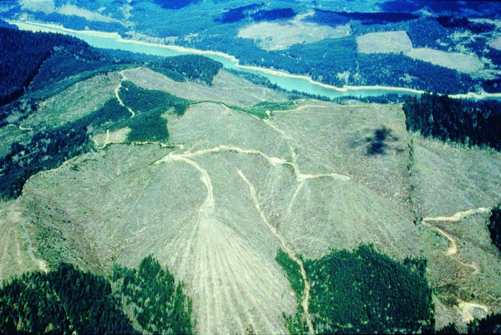 Logging in Lane County, Oregon on both public and private lands.  Source: Elizabeth Feryl, Environmental Images.