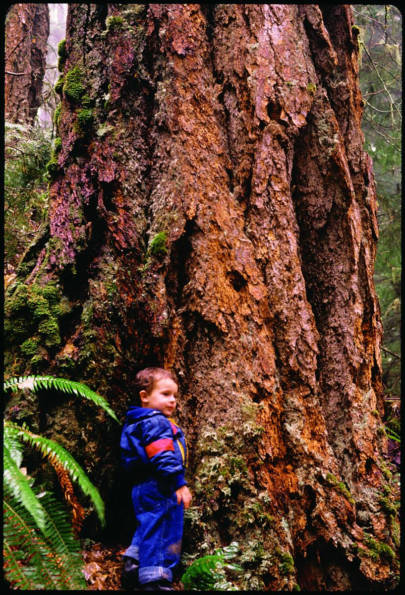 - Priority: Saving older Douglas-ir (and all other) forests for this and future generations. Photo: Gary Braasch (first appeared in Oregon Wild: Endangered Forest Wilderness (2004 Timber Press)