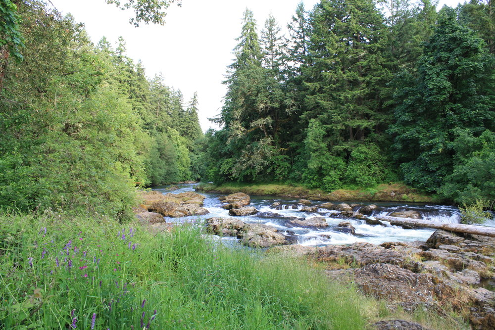 The Calapooia River near Crawfordsville.  Source:  Wikimedia Commons .