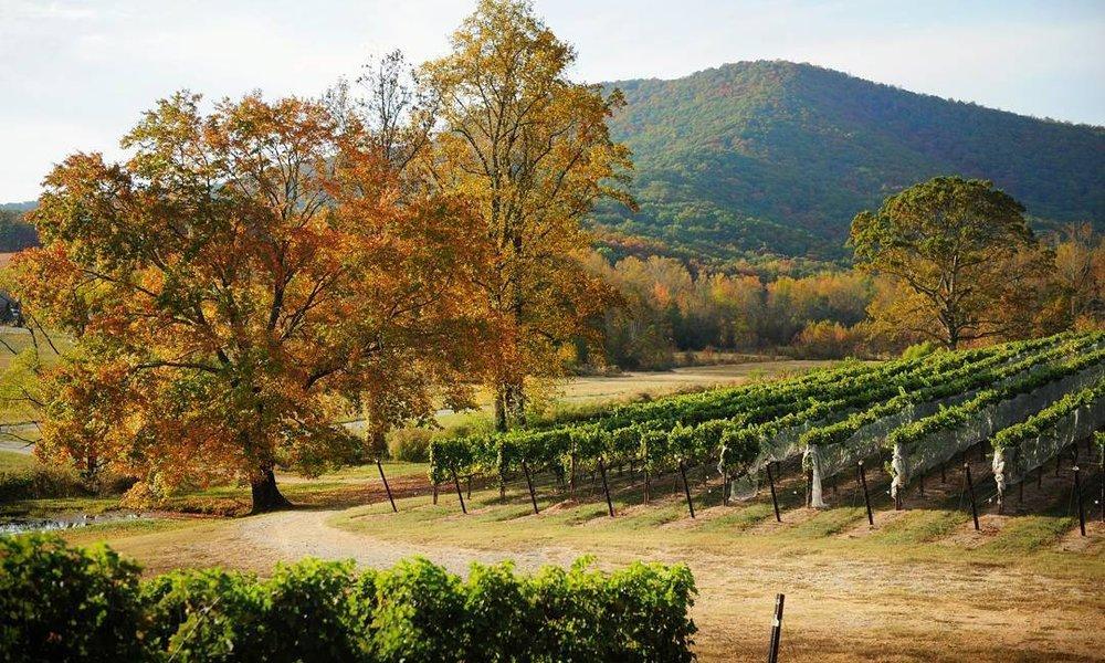 yonah-mountain-vineyards-1510687526.jpg