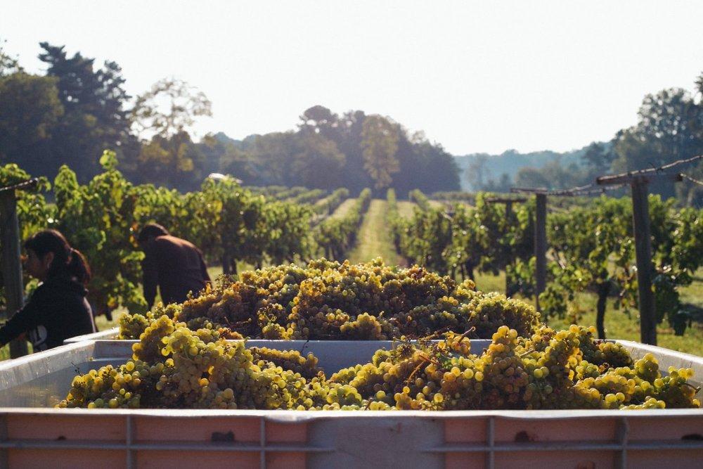 Habersham Vineyards