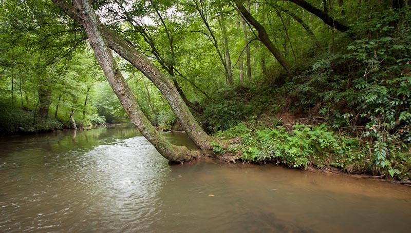 Dawson_Forest_Shoal_Creek-1620.jpg