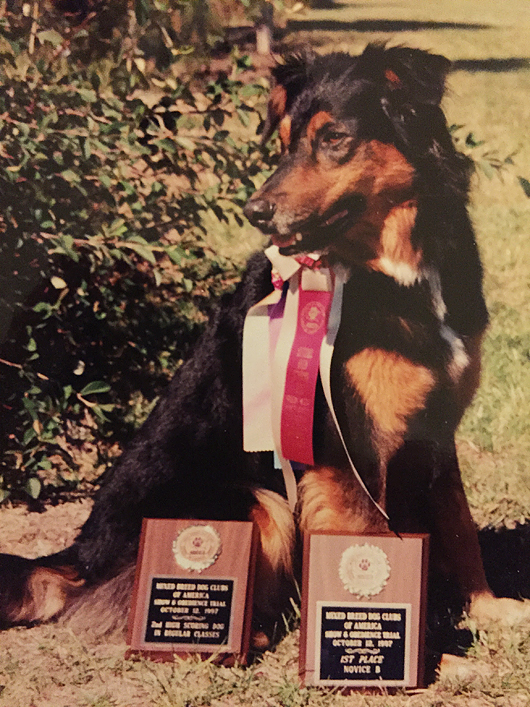 Teddy, my first rescue dog, with his awards from the Mixed Breed Dog Clubs of America, National trial. Teddy was loyal and happy and loved playing obedience training games with me.