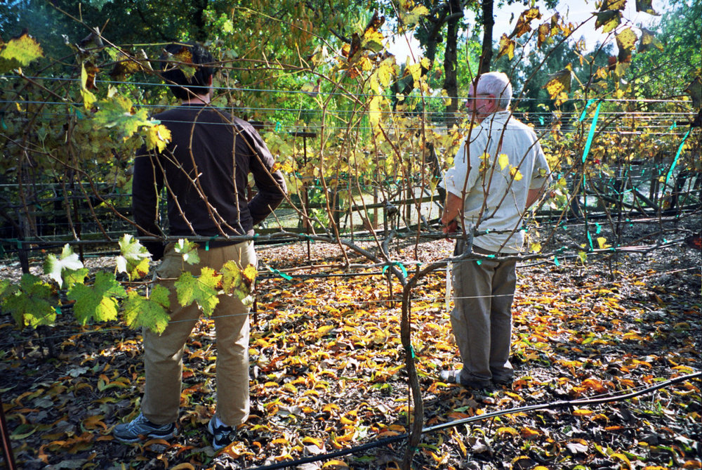 The winemaker and his son inspect the year's crop.