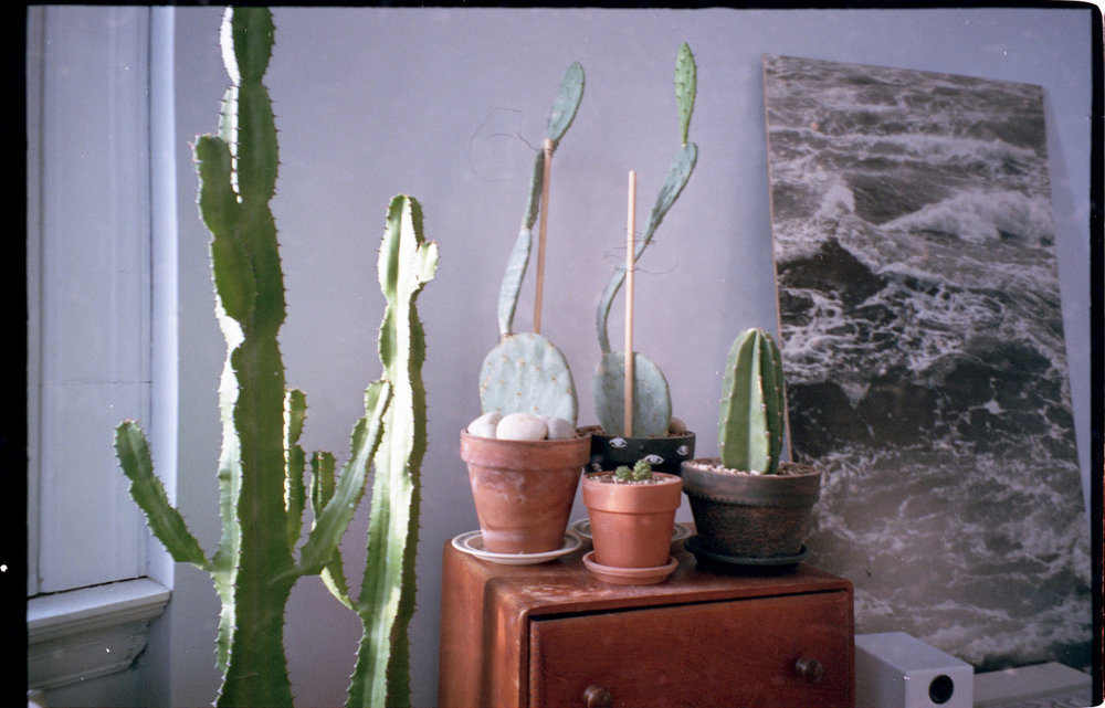 clean room, full cacti, can't lose
