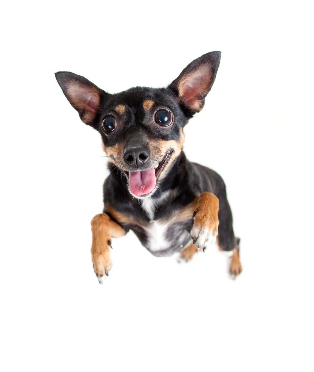 hyperdog.jpg