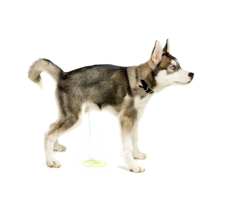 dogtrainingservicesdurhamregion