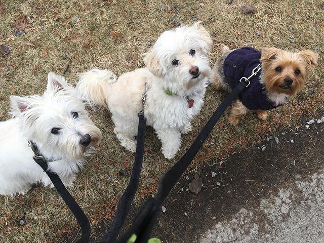 The three amigos 😍