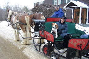 Share a sleigh ride with Rover at Mountain Top Resort