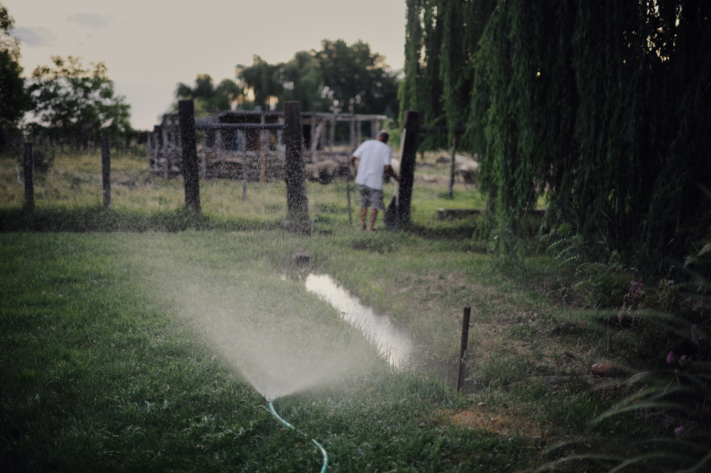 Backyard Hose, 2011