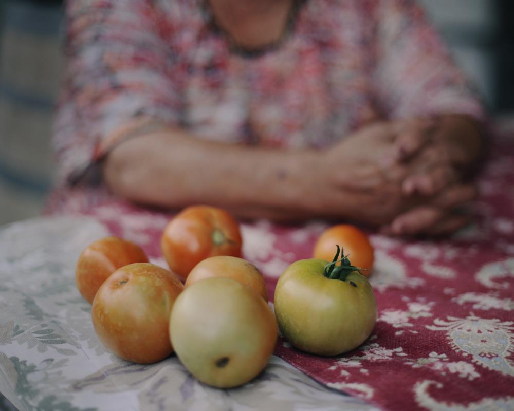 Amuma's Tomatoes, 2012