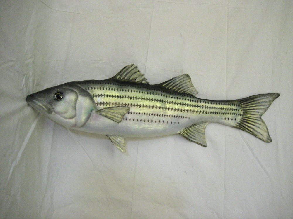 Silicon Striped Bass