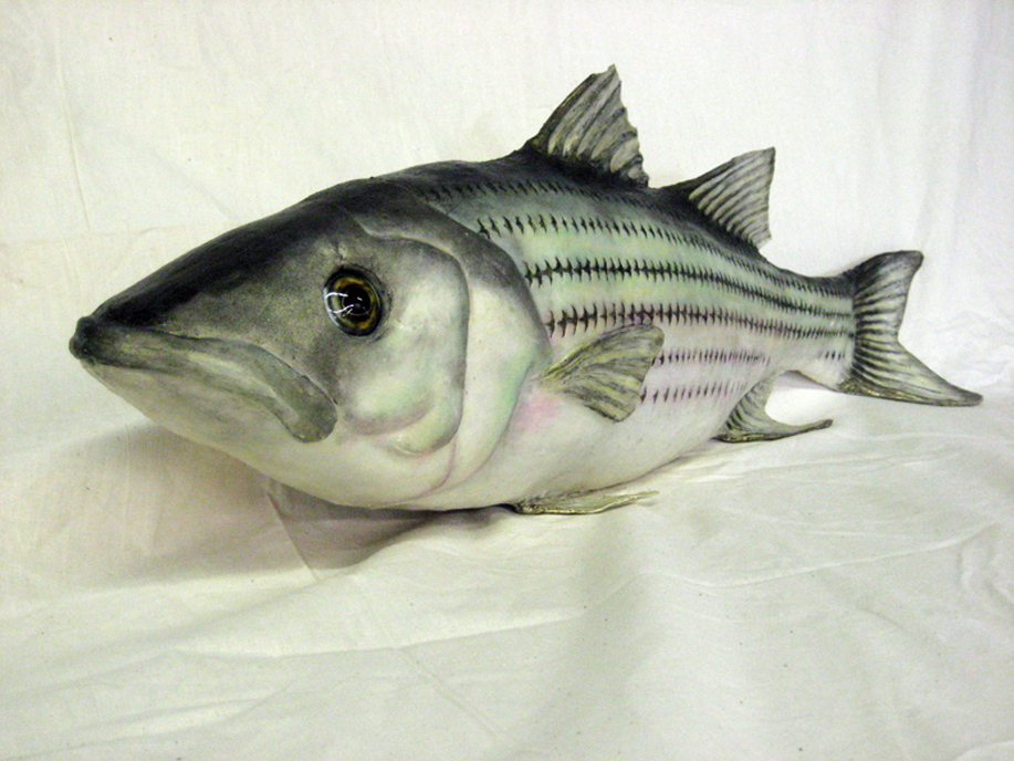 Striped Bass Det.JPG