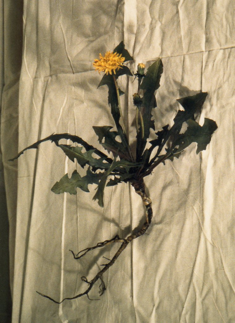 Plant Models, Brooklyn Botanic Garden