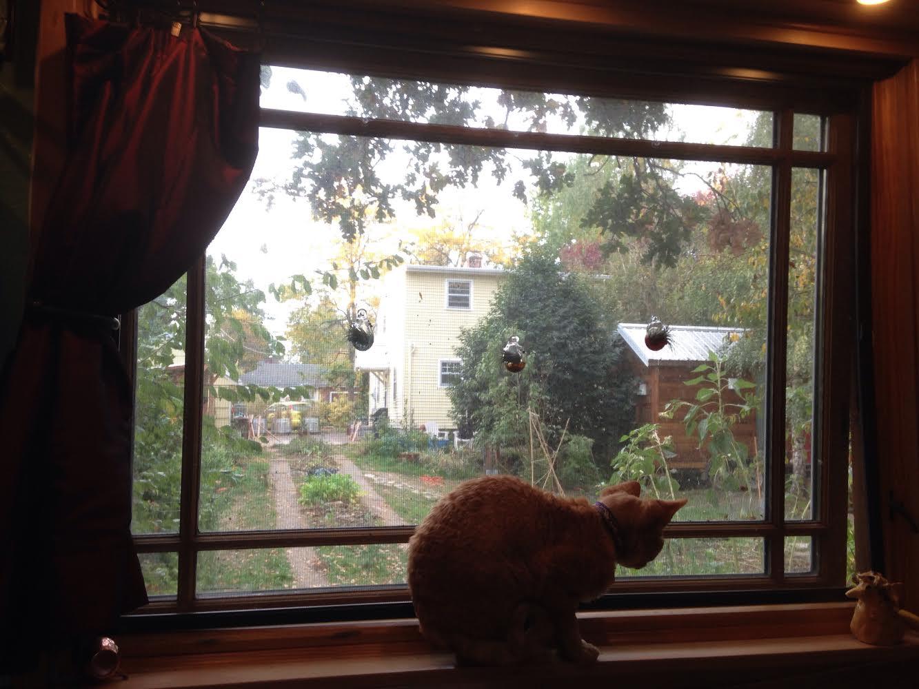 Raffi's New View