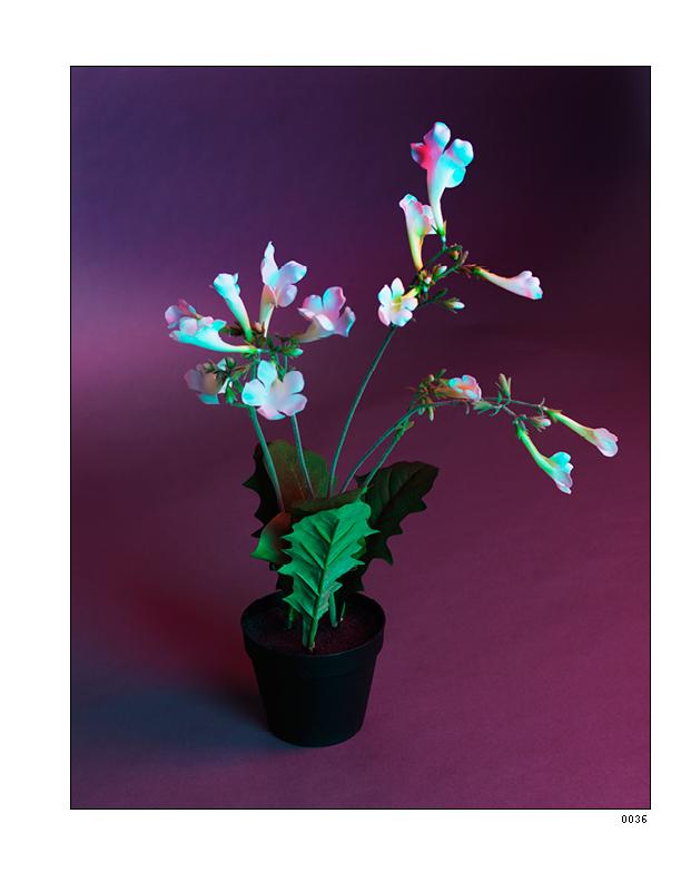 Flowers 4_1075x825_03141527.jpg