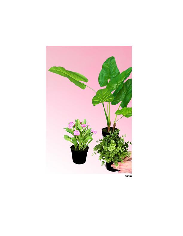 Flowers 4_1075x825_03141542.jpg