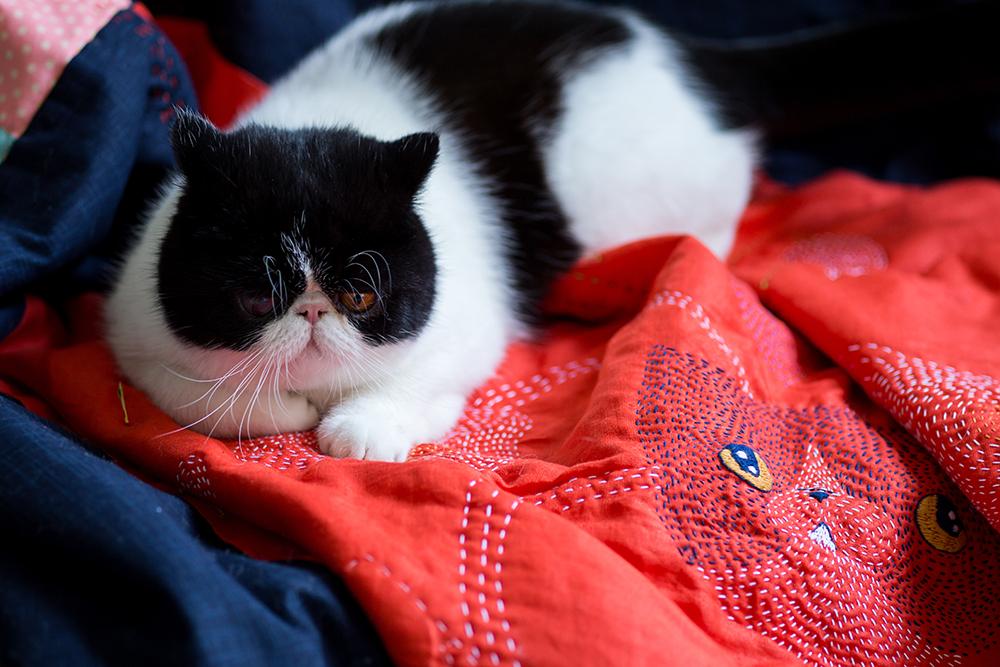 CatRabbit-2733_small.jpg