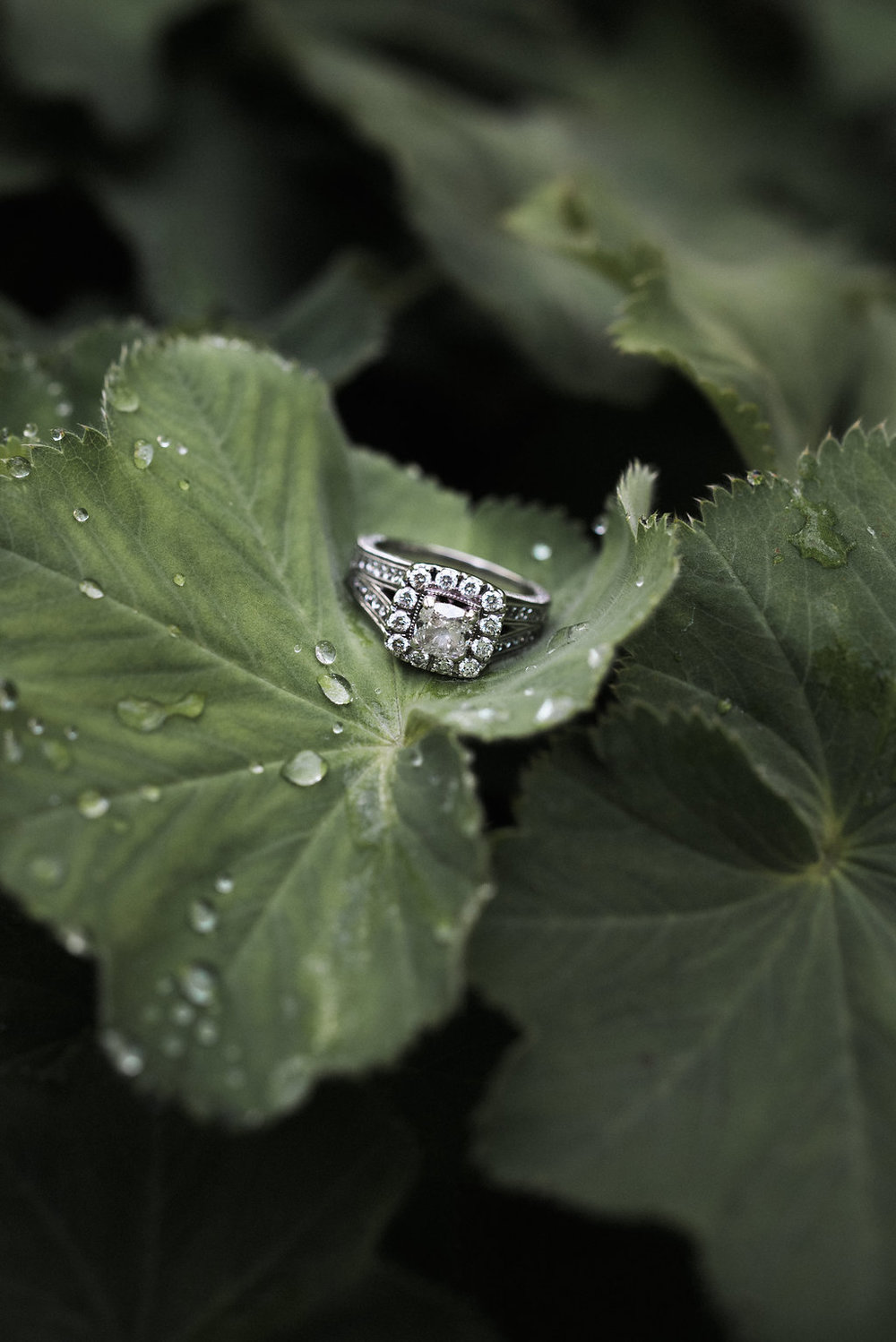 wedding ring in plant
