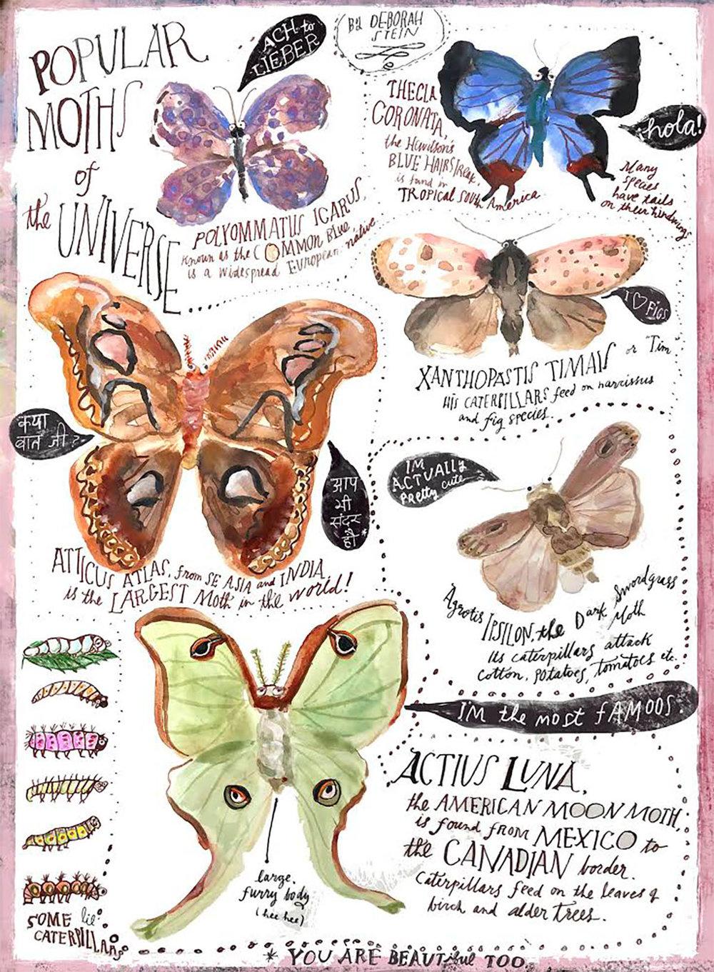 Moth_chart-150.jpg
