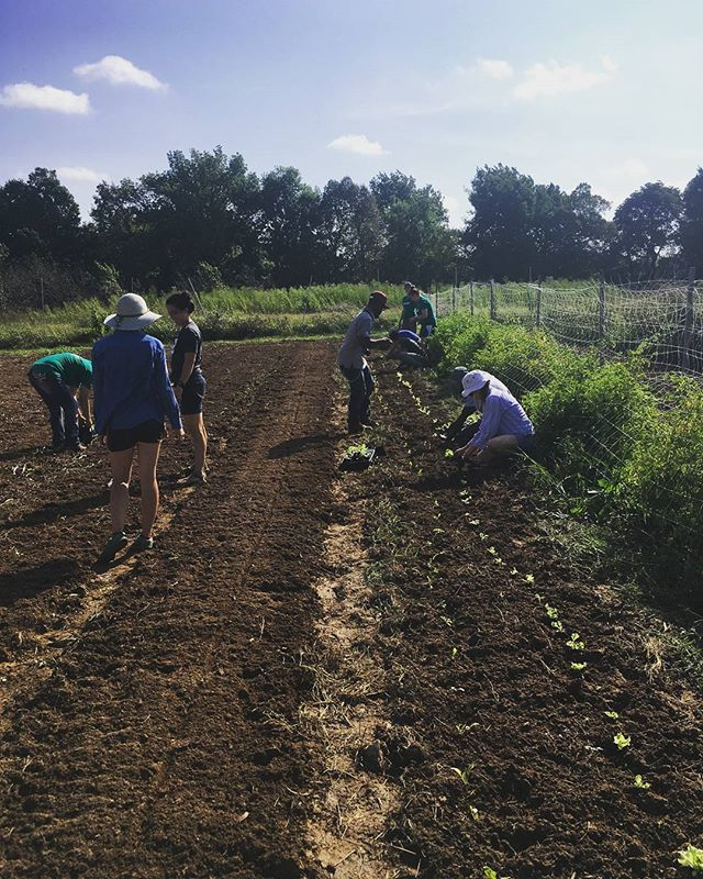 Last week the FoodCorps State Orientation volunteered at Cobblestone Farm. They helped plant lettuce, chard, collards & cabbage. We really appreciate all their hard work! We love our volunteers!  Want to volunteer? Send us a direct message here or through our Facebook page. We'd love to help you get involved! #FoodCorpsArkansas #volunteer #grow #give #plant