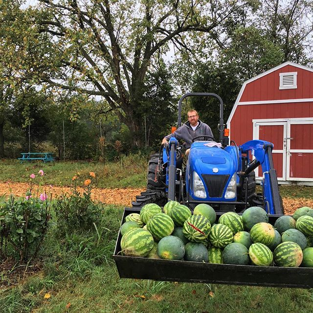Who needs pumpkins when you can have watermelons?! Watermelons are usually grown from July to September, & the best way YOU can get a hold of one is to be a part of our Community Supported Agriculture Program! Ask about how you can join CSA today! #grow #give #support #community #cobblestonefarm