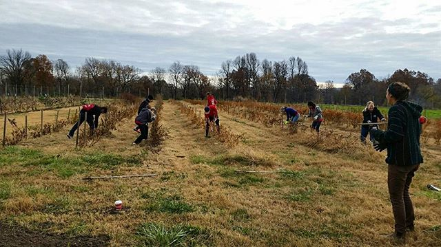 Over the weekend, the Young Men's Service League came out to the farm and they had a great time! We are grateful for all their help and enthusiasm. We love our volunteers! #grow #learn #volunteer #grateful #ymsl #cobblestonefarm