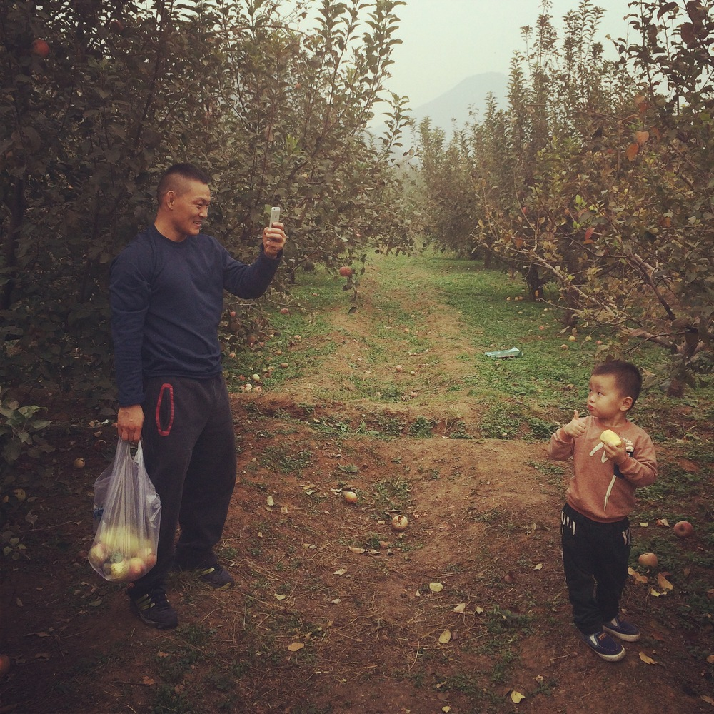 Ning Guangyou used to be a struggling farmer. Now an MMA champion he is pictured here picking apples with his son for leisure.JPG