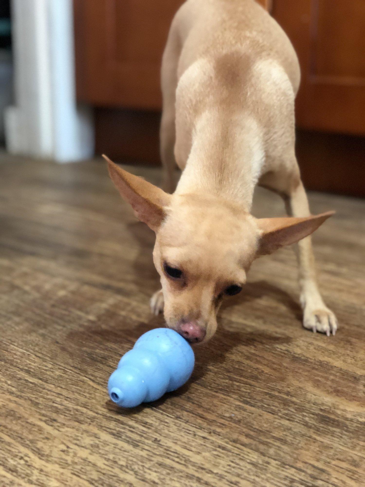 Pasadena Heat Wave affecting your dog? Break out the KONGsicles.