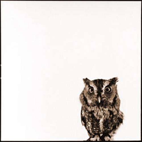 Owl-V