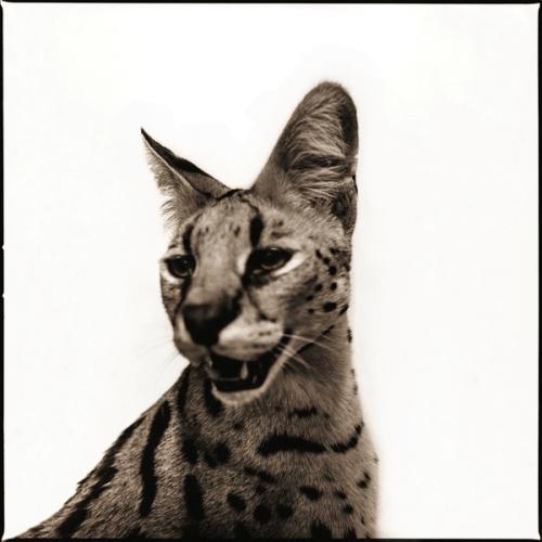 Serval-I