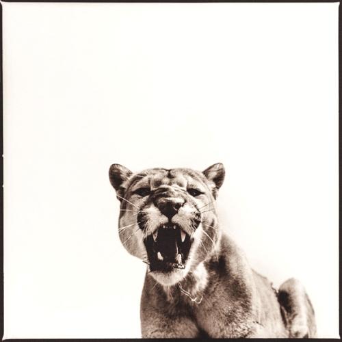 Cougar-I