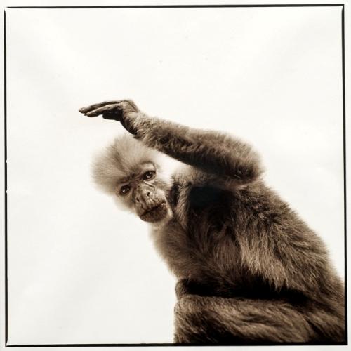 Monkey-III